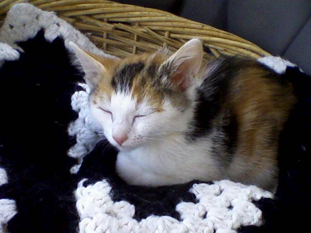 Cute Basket Kitty