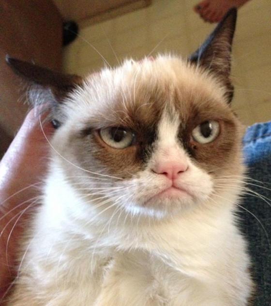cute grumpy the cat