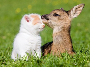 Kitten and Fawn