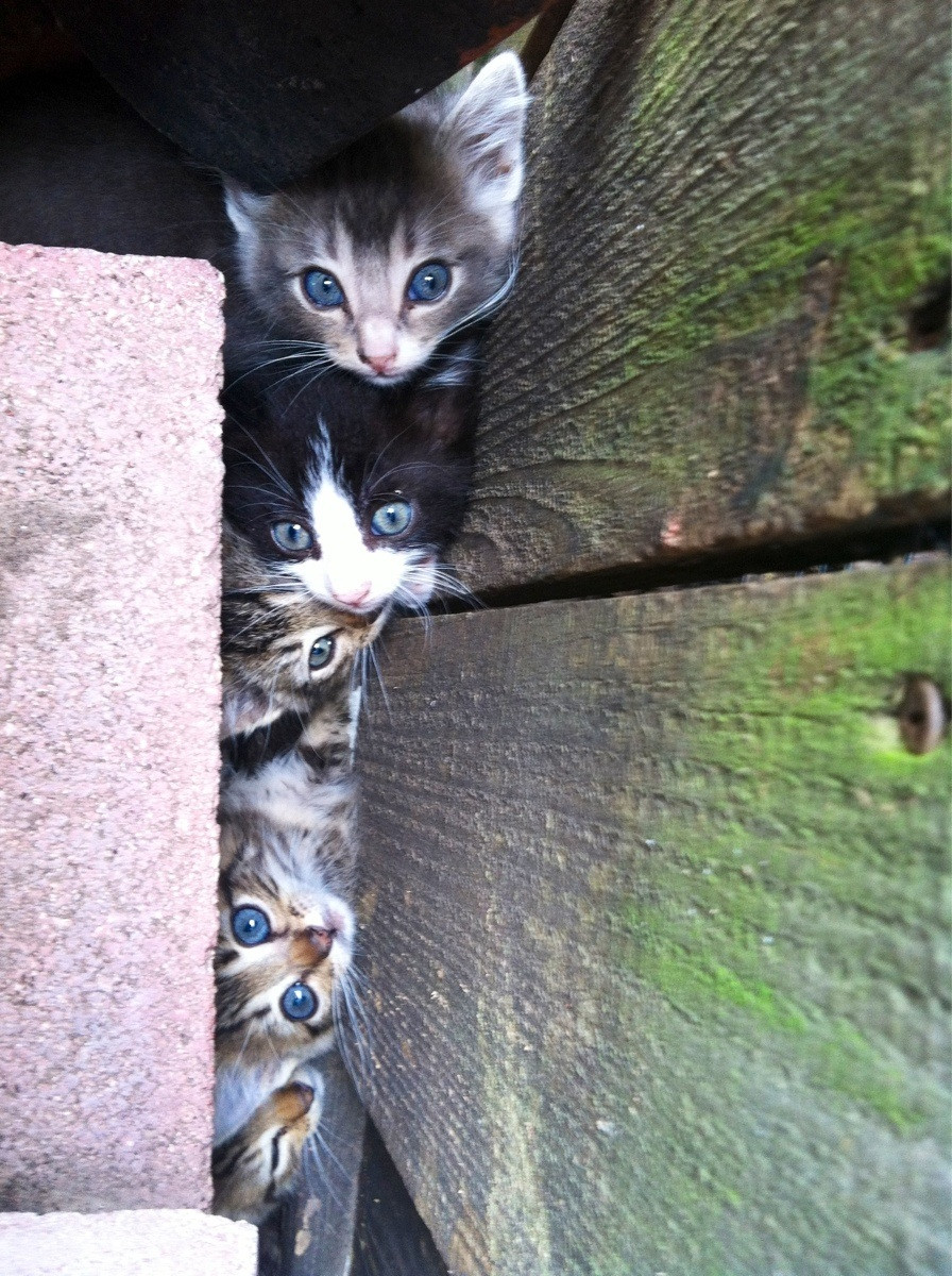 Saw a kitten run through my backyard and disappear behind some bricks. Looked over to find this...