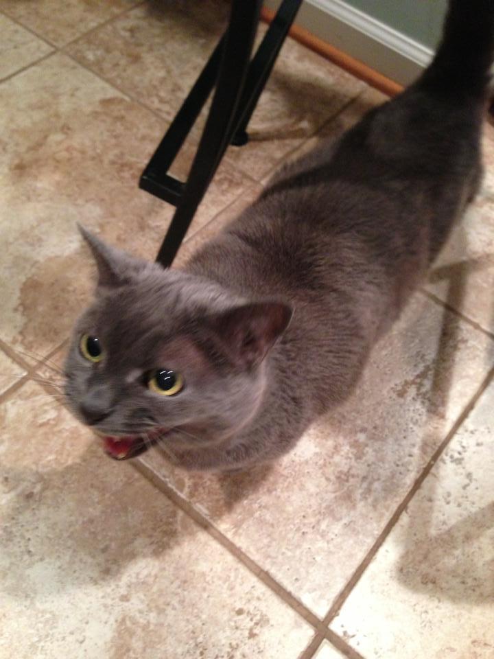 cat mid-meow