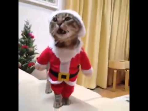Cat Dressed Like Santa Claus