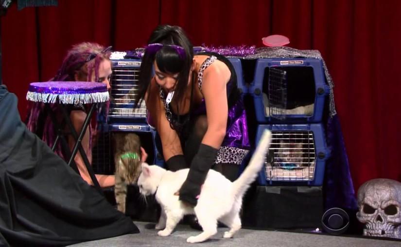 The Acro-Cats meet Colbert