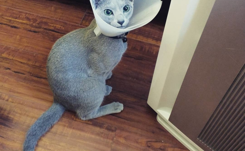 All done!! I was such a brave boy, and now I get to wear this sweet cone for two weeks