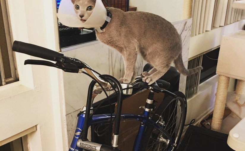 Who's ready for a bike ride??