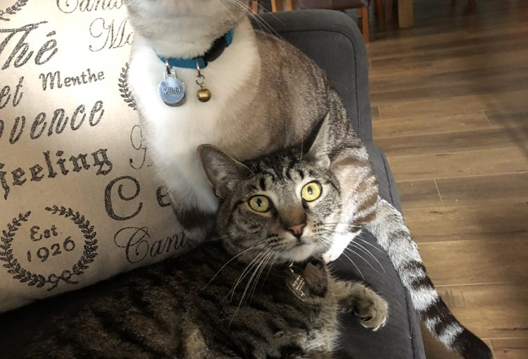 Milo and Mowgli