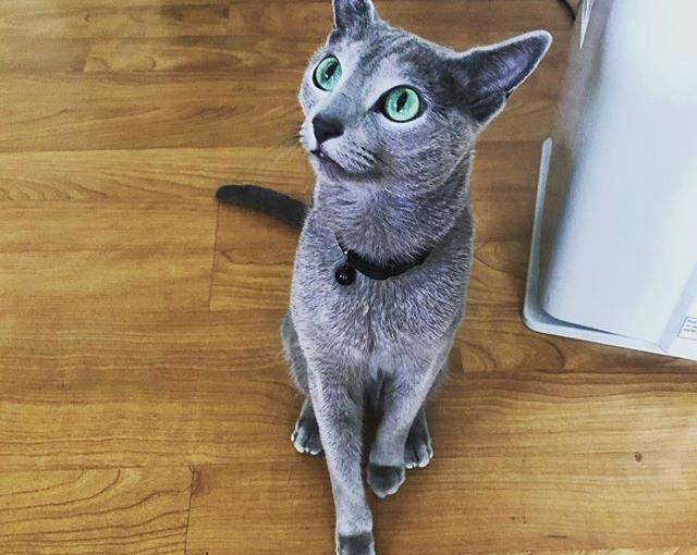 It's my 3rd birthday!! 🎂🎁🐱 Where's the tuna??